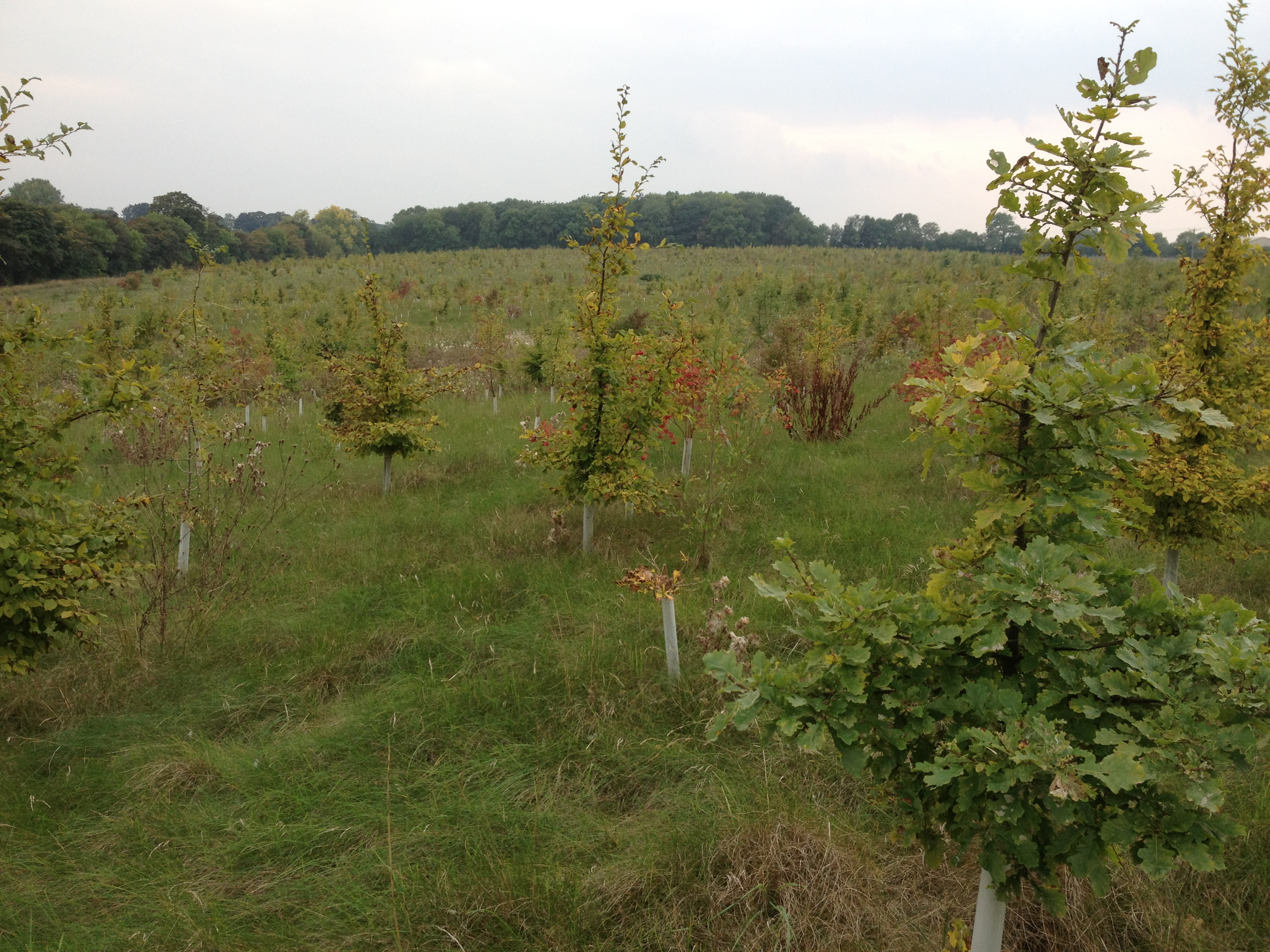 Trees planted for the Woodland Trust